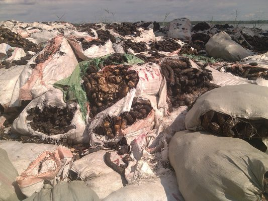 Le latex d'Hévéas produit à Yangambi en entente d'évacuation vers Kisangani par une barque motorisée, province de la Tshopo, RD Congo© Hervé Mukulu