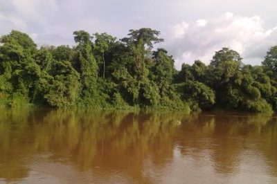 La forêt vierge le large du fleuve Congo dans la province de la Tshopo, Nord-Est de la R D Congo © Hervé Mukulu
